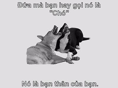 Chế bức ảnh động vật hài hước