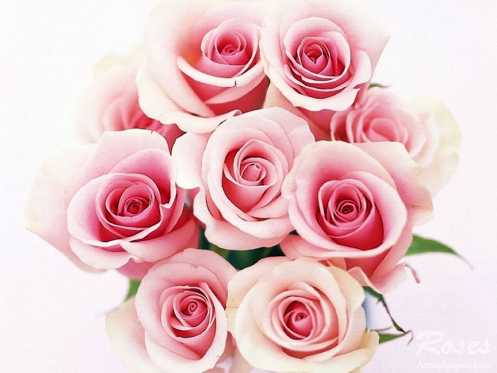 Tải hình nền hoa đẹp cho ngày 20/11 miễn phí- Hình 6