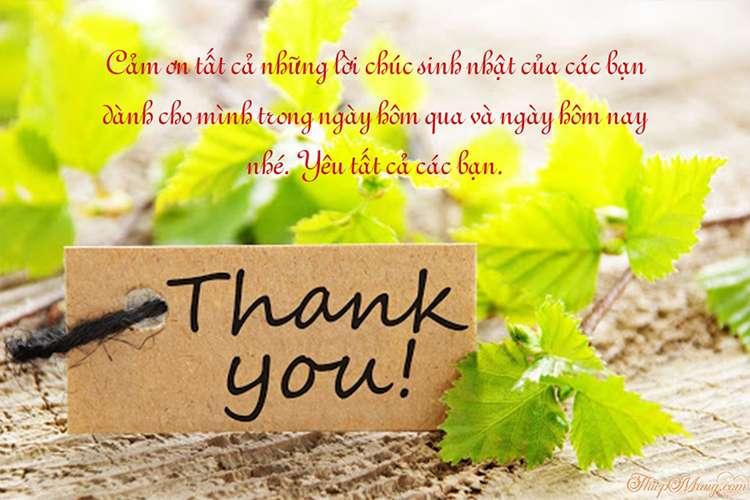 Tạo thiệp cảm ơn sau ngày sinh nhật trọn vẹn và ý nghĩa