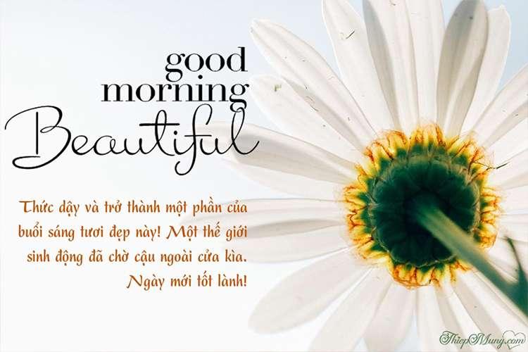 Thiệp hoa chào buổi sáng mẫu hoa cúc